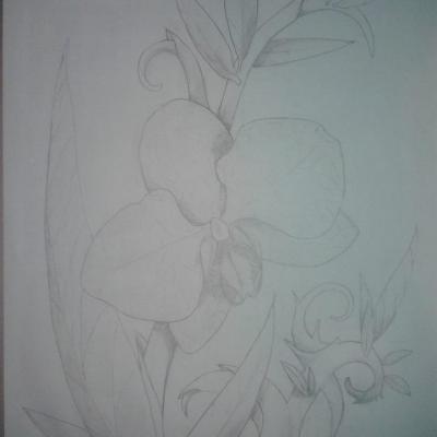 Dessin crayon orchidee